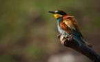 Calendrier des visites thématiques sur l'ornithologie à la réserve naturelle de l'étang de Biguglia