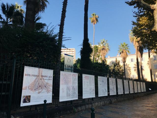 Exposition Botanique Tropicale - Francis Hallé