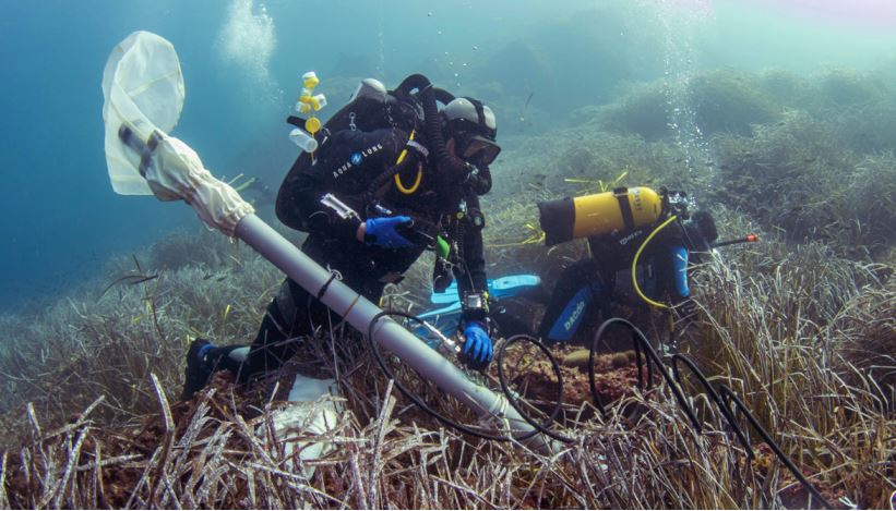 La Planète Revisitée en Corse : une grande expédition au service de la biodiversité