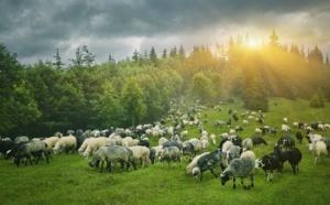 Cunsultazioni publica pà i tarritorii campagnoli / Consultation publique pour les zones rurales