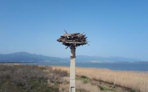 L'Etang de Biguglia, sanctuaire des oiseaux migrateurs