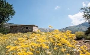 Comité de Massif de Corse
